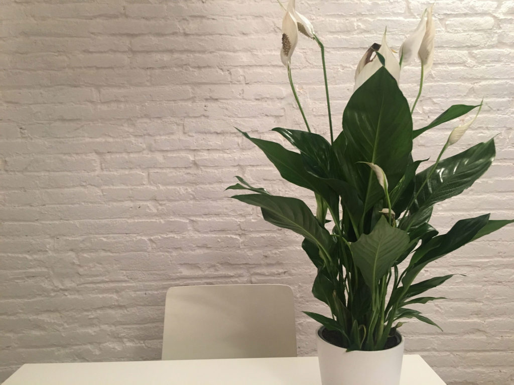 Indoor Plants For The Office Low Maintenance Office Plants