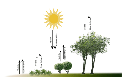 Vegetation-index-diagram