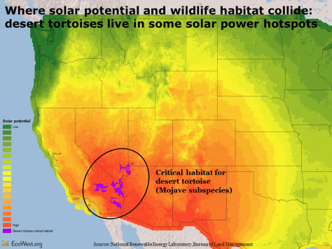 Solar energy potential and desert tortoise habitat