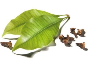 Info Harga Cengkeh Terbaru Harga Cengkeh Manado Terbaru Iklangratiz Jual Clove Leaf Essential Oil 100 20 Cc Cipta Kimia Tokopedia