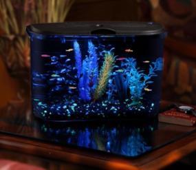 Cool fish tanks 5 gallon unusual fish tanks 10 creative for Cool 10 gallon fish tank