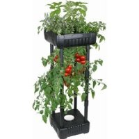Amazon.com : Compact Upside Down Tomato Planter : Patio ...