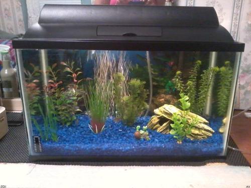 How Many Aquarium Fish Can You Put In Your Fish Tank Aquarium | Apps