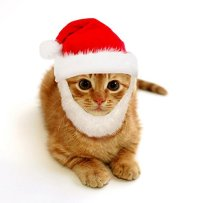 Prymal Santa Dog Cat Costume. This Pet Costume Turns Your ...