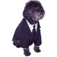 Amazon.com : Dog Business Suit Shirt Tie Size Petite : Pet ...