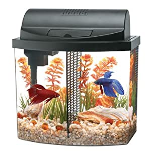 Amazon.com : Aqueon Aquarium Betta Bow 2.5 Gallon Acrylic Aquarium Kit