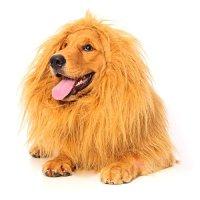 Dog Lion Mane Halloween Costumes - Best Costumes for Halloween