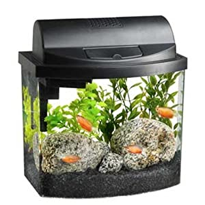 Bow 2.5 Gallon Desktop Aquarium Kit, Black : Fish Tanks : Pet Supplies