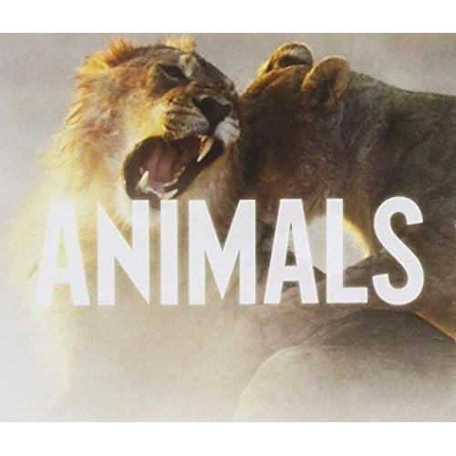 Animals (2tracks)
