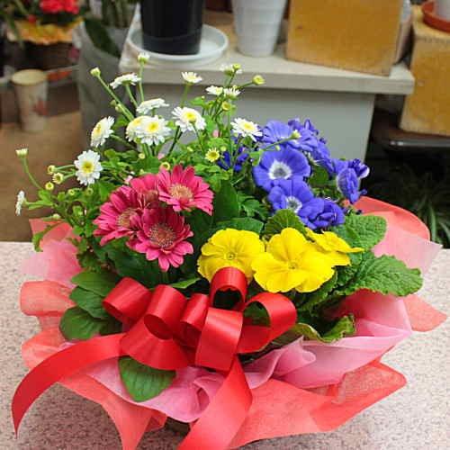 季節の鉢植え 寄せ鉢ギフトM 3から4種類の鉢花や観葉植物をかごにおまかせアレンジ お祝い 誕生日 歓送迎会