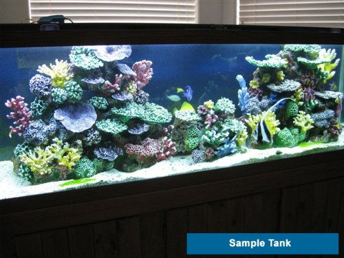 Saltwater aquarium rock saltwater aquariums aquarium for Fish only saltwater tank