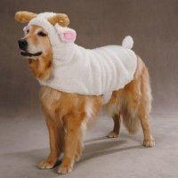 Zack & Zoey Polyester Lil Sheep Halloween Dog Costume, X ...
