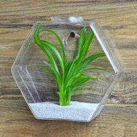 Hexagon Shape Clear Glass Plant Terrarium / Small Wall ...