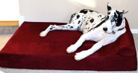 Orthopedic Dog Beds For Great Danes | WebNuggetz.com