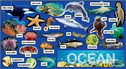 Ocean Plants Names List