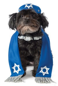 10 Holiday Outfits for Your Dog  THINK PUP
