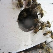 Honeychild - Beekeeping Theory in Rheenedal 1i