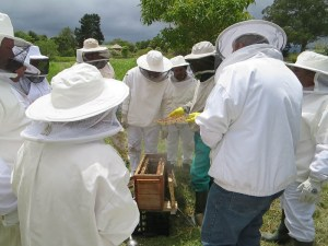 Honeychild - Beekeeping Theory in Rheenedal 1j