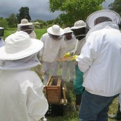 Honeychild - Beekeeping Theory in Rheenedal 1j