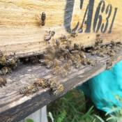 Honeychild - Beekeeping Theory in Rheenedal 1p - honeybee hive