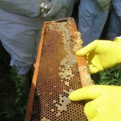 Honeychild - Beekeeping Theory in Rheenedal 1p