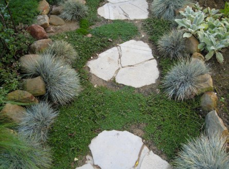Festuca glauca softens the cobble stone garden edging