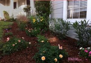 FLower-carpet-amber-rose-Home-and-Family