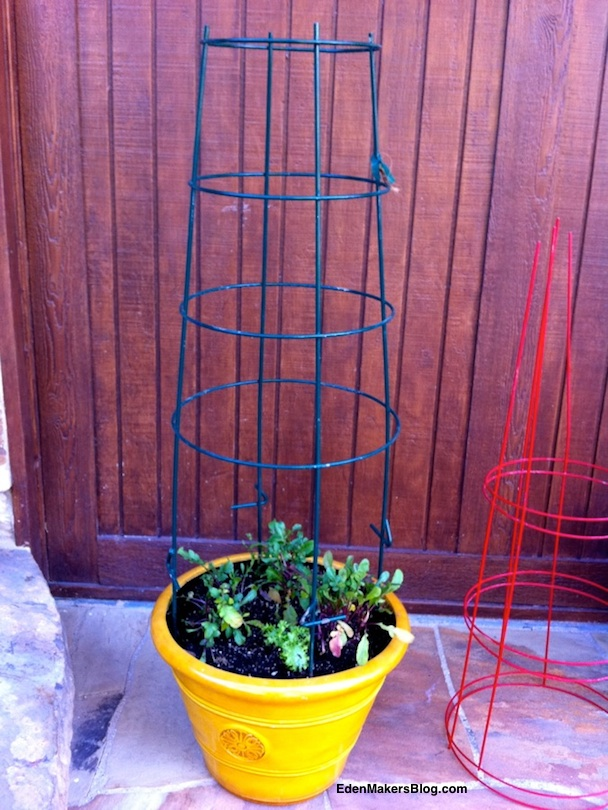 green-metal-tomato-support-trellis-in-larg-container-edenmakersblog