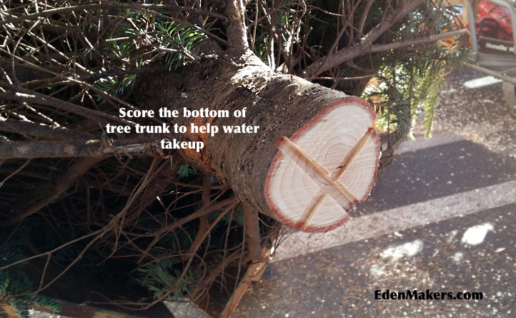 Score-bottom-of-christmas-tree-trunk for-water-takeup-edenmakersblog