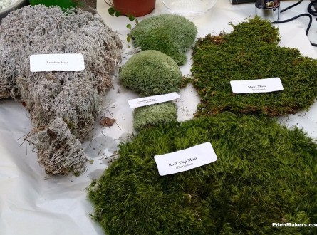 Moss-varieties-moss-acres-edenmakers