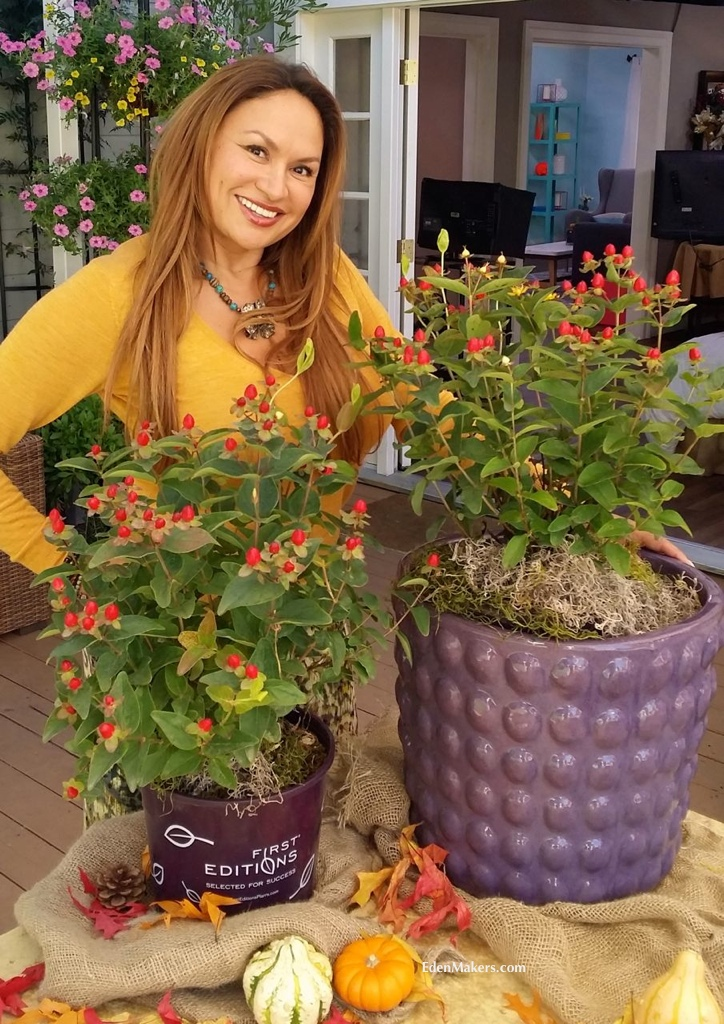 garden-designer-shirley-bovshow-fall-container-plants-hypericum-red-fame-purple-containers-edenmakers