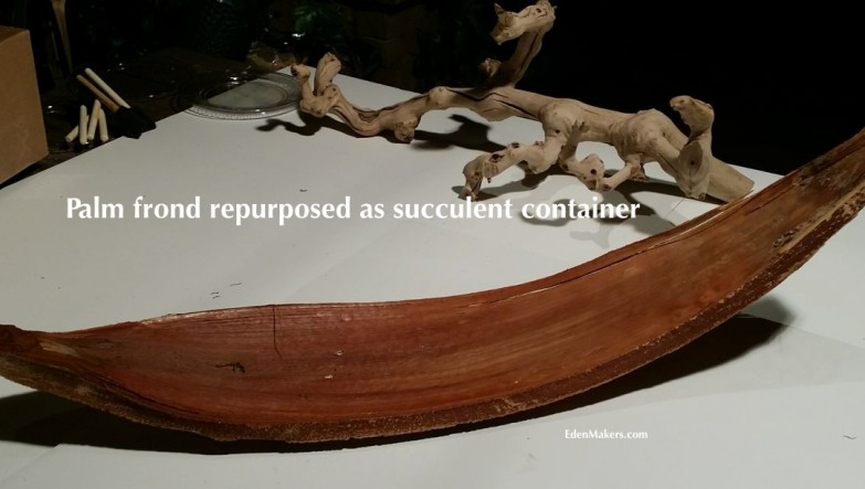 palm-frond-shaped-like-skateboard-made-to-succulent-container-edenmakers-blog