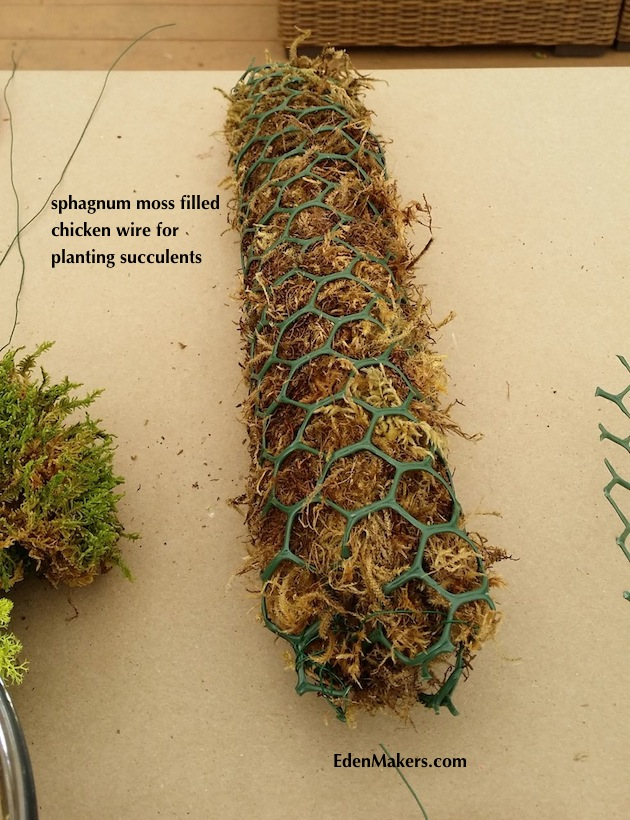 sphagnum-moss-filled-chicken-wire-burrito-for-palm-frond-succulent-container-arrangement-edenmakers-blog