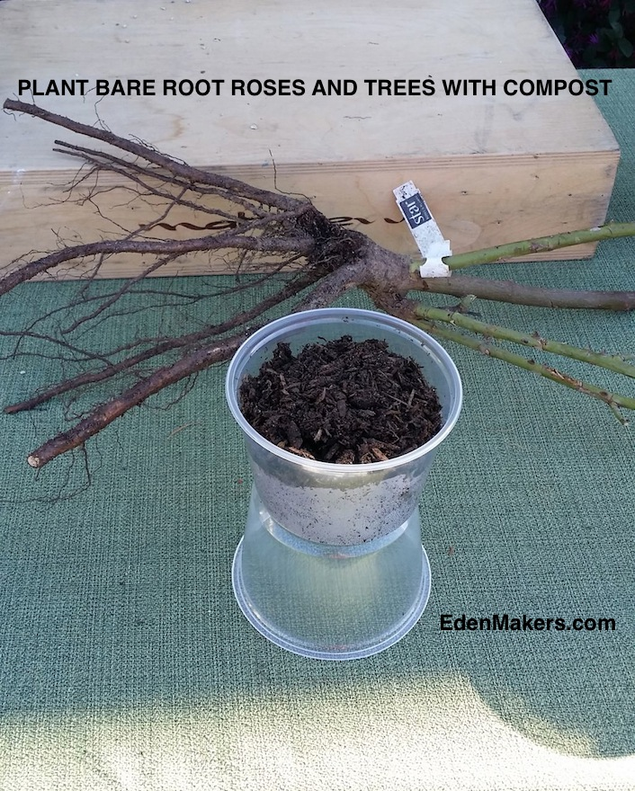 COMPOST-EXCELLENT-FOR-BARE-ROOT-ROSES-TREES-ALL-PLANTS-BENEFIT-FROM-EDENMAKERS-BLOG