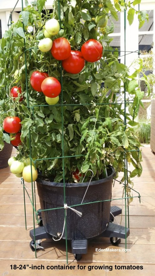 large-18-24-inch-container-grow-tomatoes-trellis-support-edenmakers-blog