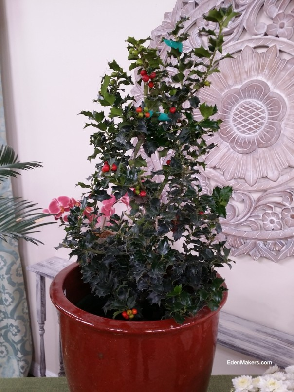 holly-leaves-berries-poisonous-to-dogs-ilex-edenmakers-blog