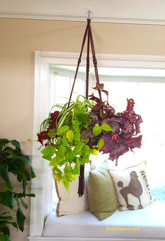 closeup-hanging-instant-indoor-planter-with-mixed-plants-shirley-bovshow-edenmakerblog