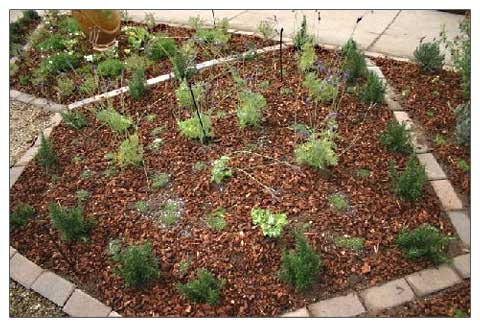 edged herb garden bed