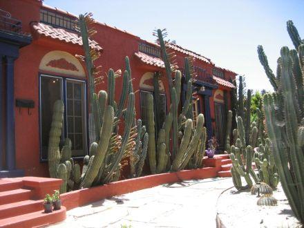 columnar cereus plant
