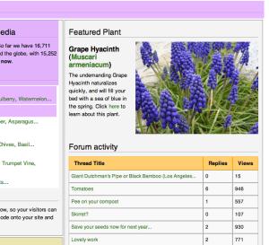 Muscari plant information
