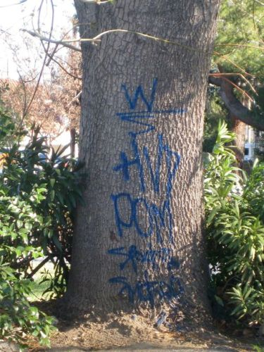 graffiti on a tree