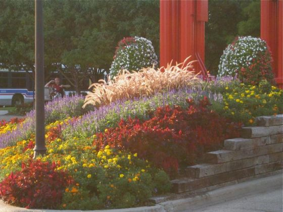 chicago-street-garden-red-fountain-grass-begonias-salvia-marigolds