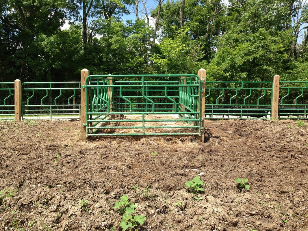 Feed Hay Fenceline Feeding System Summary Eden Shale Farm