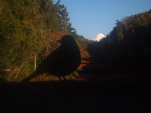 I sat with this tiny bird and stared at the mountain, angrily. I didn't help.