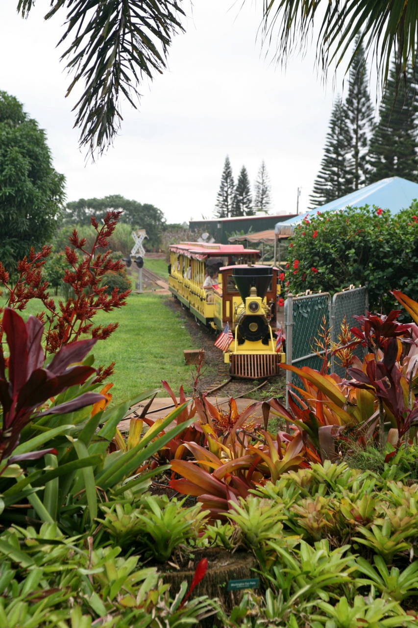 Dole Pineapple Plantation S Legacy In Hawaiʻi Edge Effects