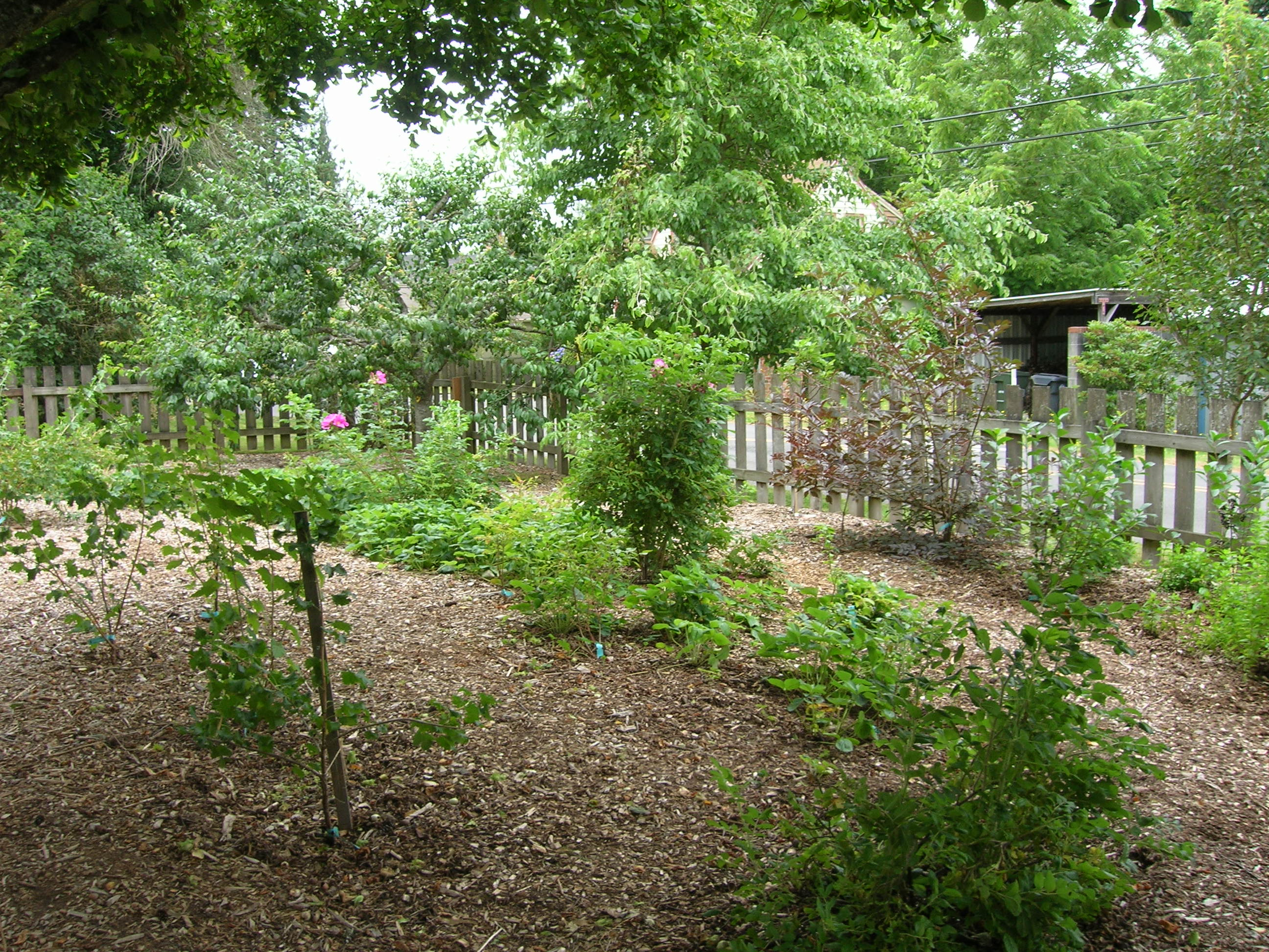Garden S Edible Forest Gardens Edible Forest Garden 39s Blog