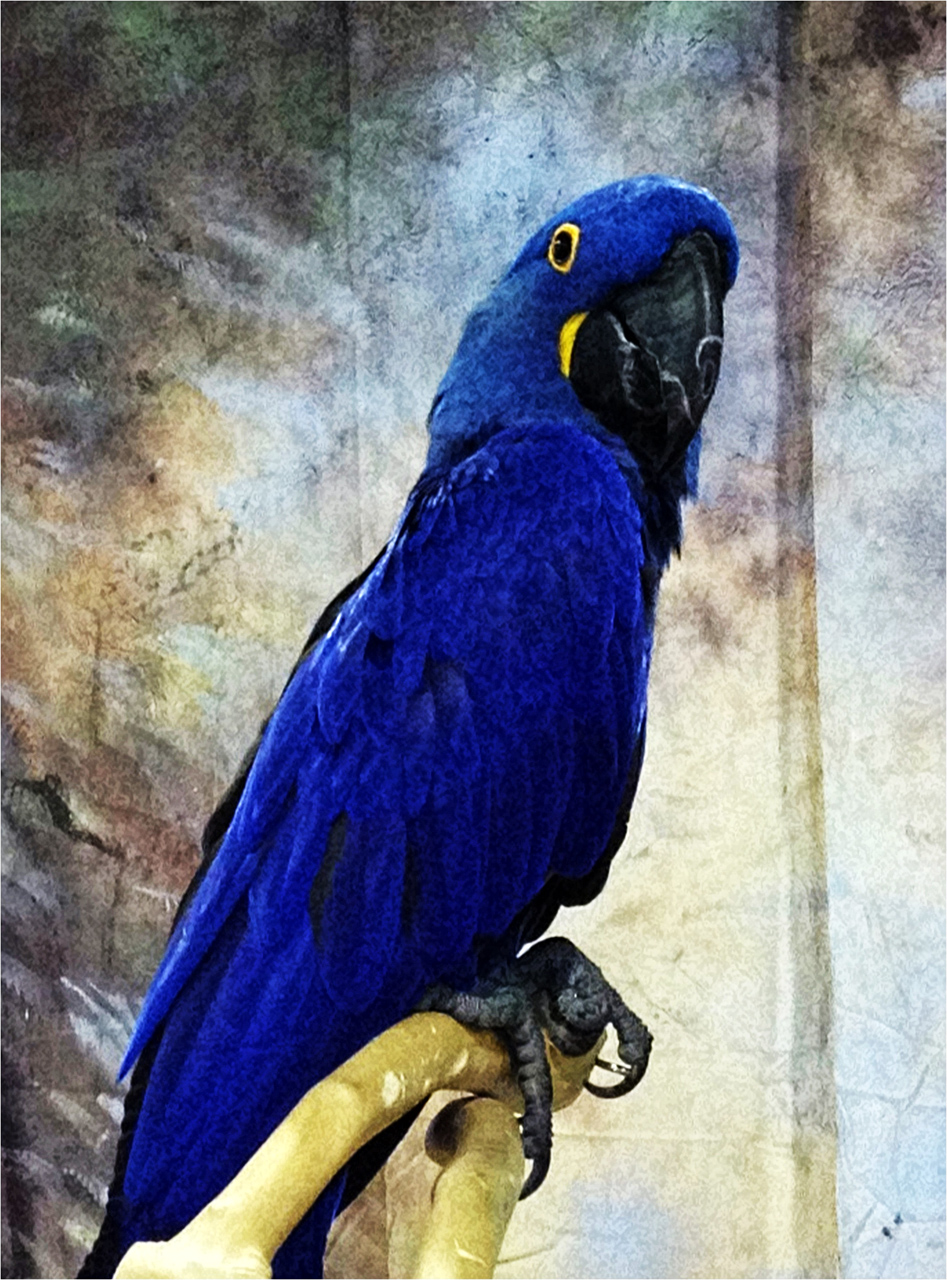 Cute Parakeet Wallpaper Blue Parrot Bird Pictures To Pin On Pinterest Pinsdaddy