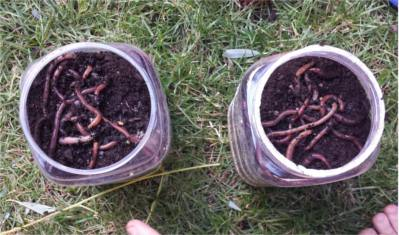 thumbnail granja de lombrices