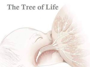tree-of-life-breast