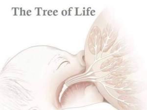 tree-of-life-breast